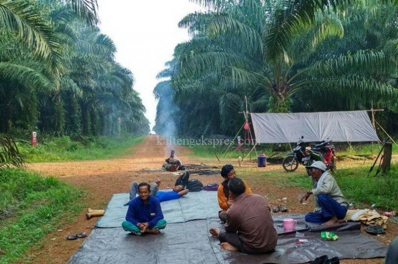 Sejumlah warga sedang memasang tenda dan lapak terpal di tanah di ruas jalan areal kebun perusahaan saat diambil poto Jumat (20/10)