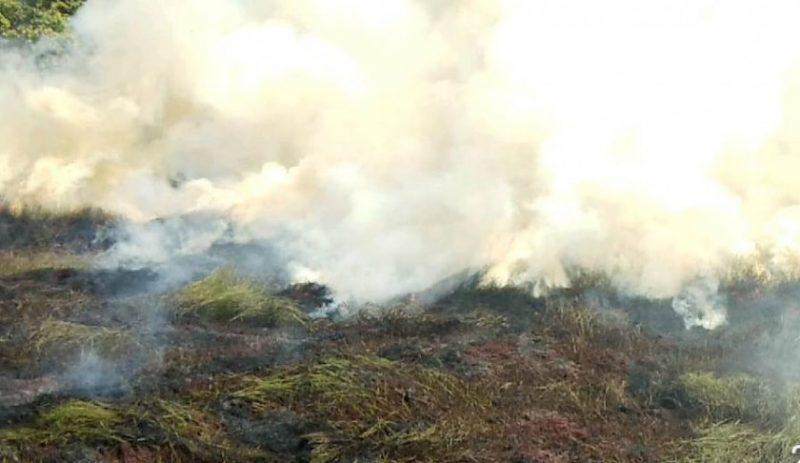 Kepulan asap saat kejadian kebakaran lahan di Sei Tatas Kelurahan Baru Selasa (25/6/2019).