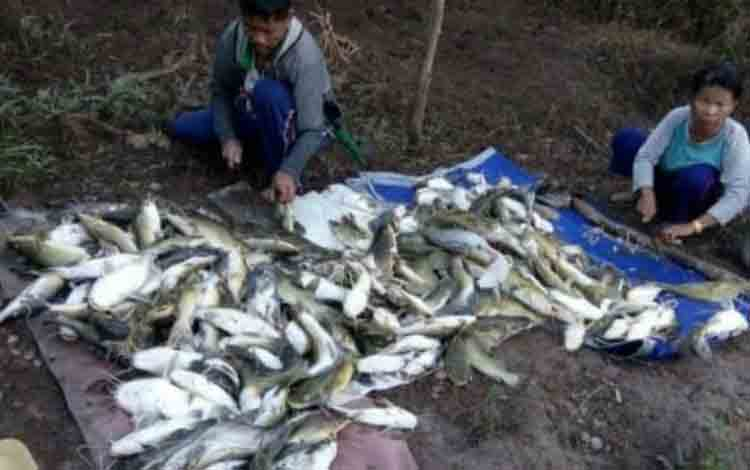 IST- Warga saat mengumpulkan ikan yang mati di sungai Jumat (6/7/2019).
