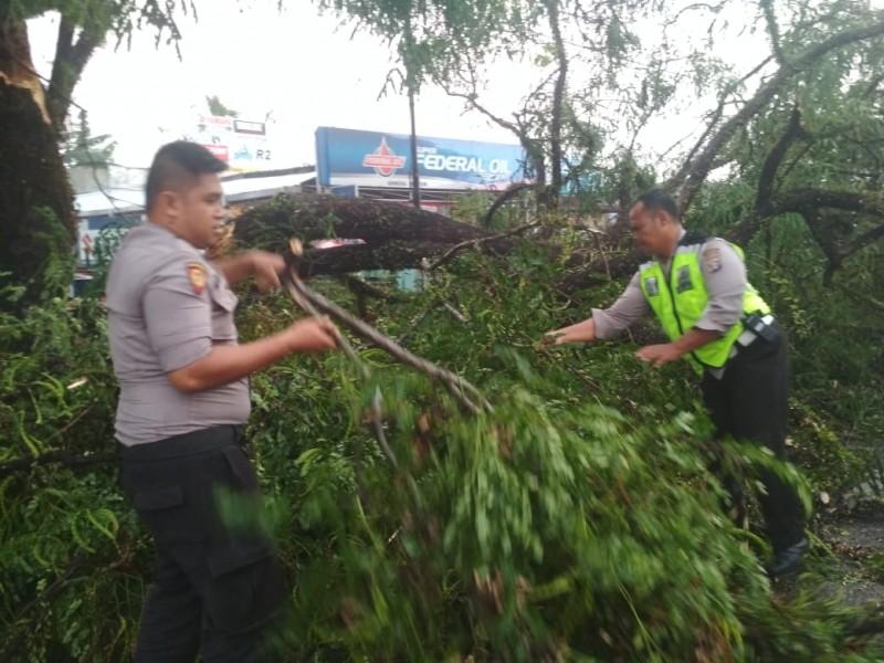 Anggota Polsek Pahandut saat membersihkan pohon tumbang di Jalan Murjani Palangka Raya Minggu (29/9/2019).