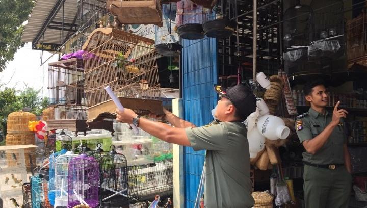 Petugas BKSDA saat mengamankan burung cucak rawo dari pedagang burung kerana menjual burung tersebut telah dilarang tegas.