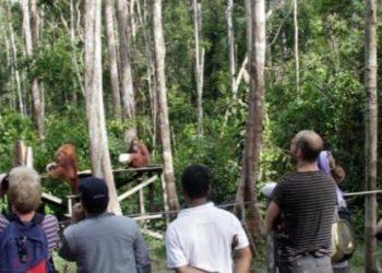 Taman Nasional Tanjung Puting (TNTP) merupakan kawasan wisata yang mulai terdampak akibat merebaknya kasus virus Corona. Foto : Yusbob