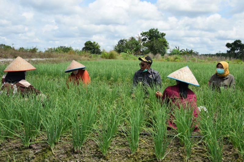 Plt Gubernur Kalteng Habib Ismail bin Yahya, pada saat meninjau ujicoba tanaman bawang merah, di Desa Trahean, Kabupaten Barito Utara. Foto: Biro Adpim
