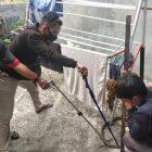 Tim animal rescue dari Emergency Response Palangka Raya (ERP) berhasil menangkap ular king kobra, Senin (11/1/2021) Siang. Foto : Am