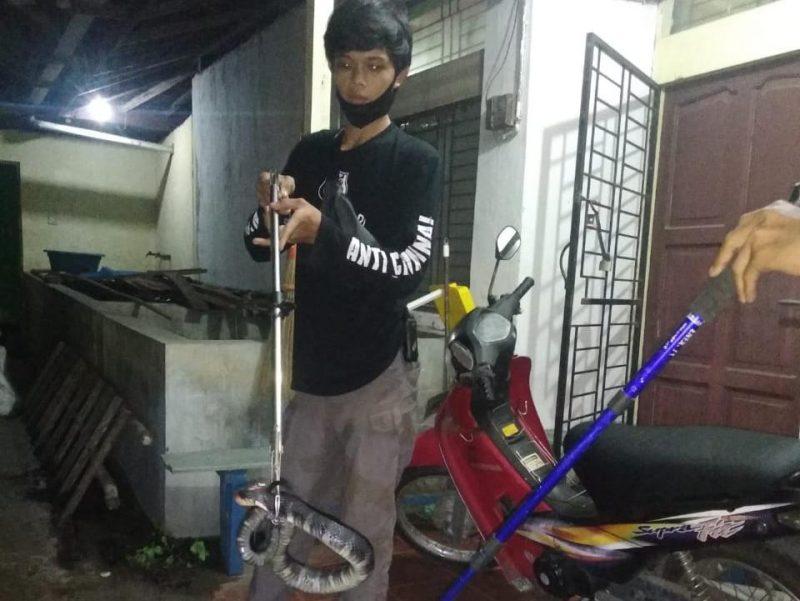 Tim ERP Palanagka Raya mengevakuasi ular di pemukiman warga Jl Damang Salilah 1 Palangka Raya, Minggu (21/2/2021). Foto : Am